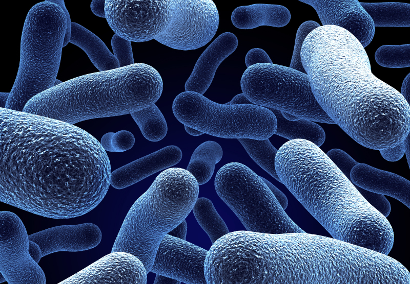 The Role of Microbes in Human Health